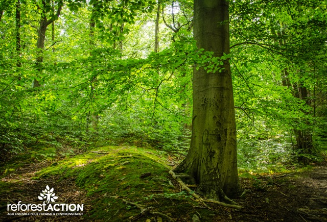 Arbre-foret © Reforest'Action